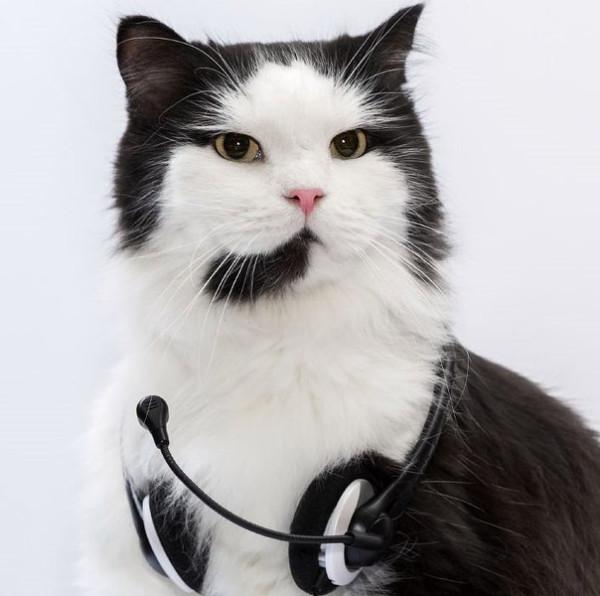cat 12.jpg