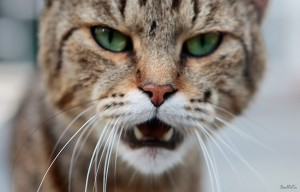 cat agressive 6.jpg