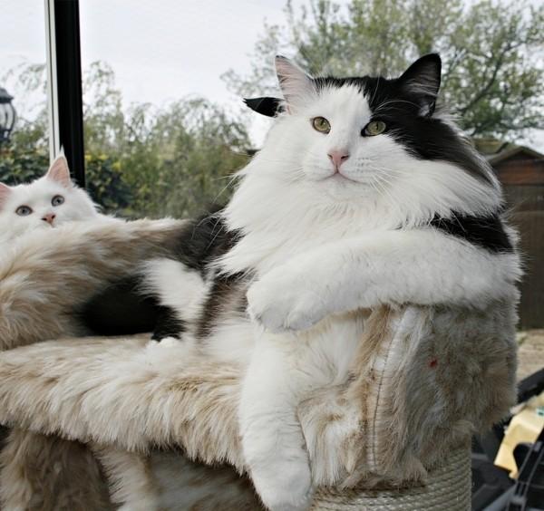 cat 18.jpg