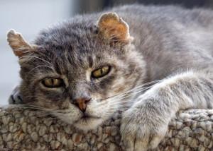 cat 19.jpg
