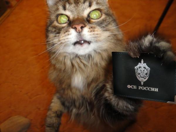 cat fsb.jpg