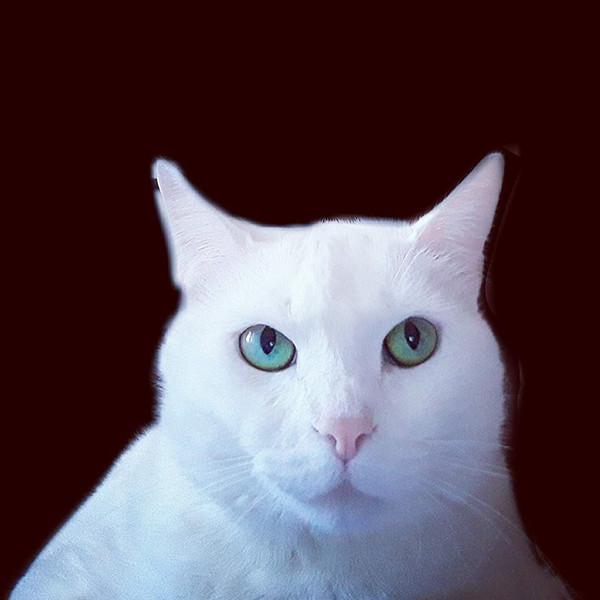cat 22.jpg