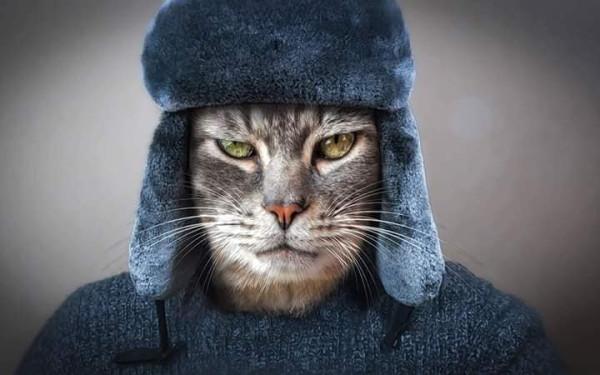 cat 24.jpg