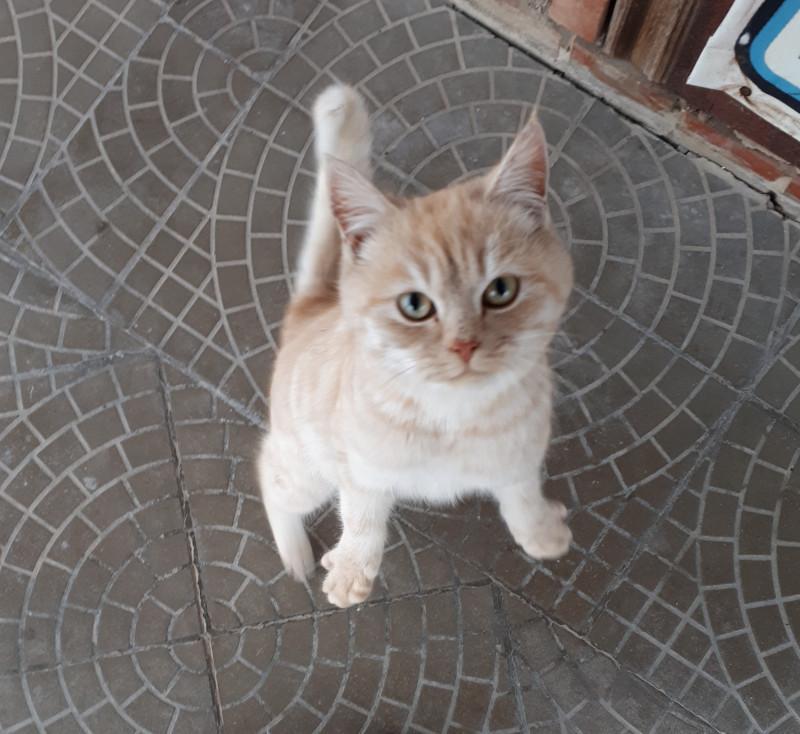 Обещала котика в каждую статью! Нате)