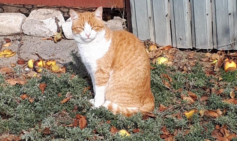 Коты сегодня  грелись на солнышке