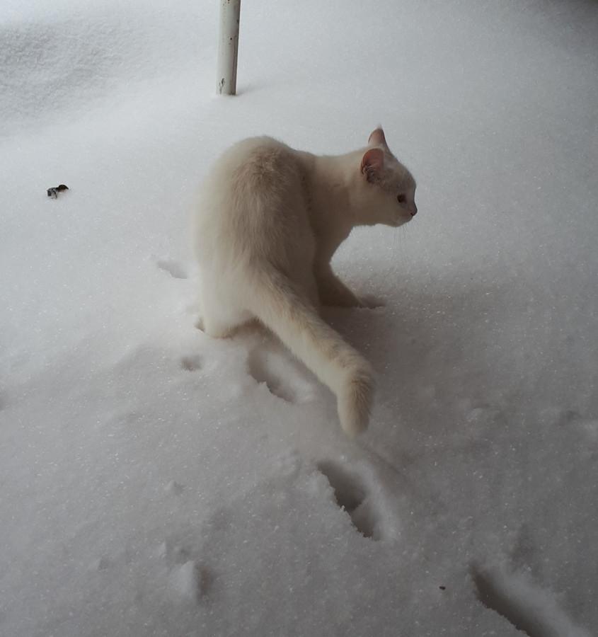 А снег идёт, а снег ид-ё-о-о-т!