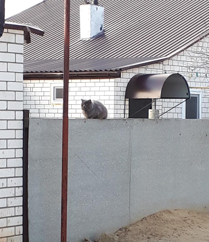 Котик на оборотня похож) Когда подошли поближе сиганул во двор.
