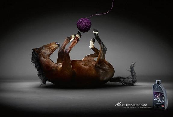 horses purr