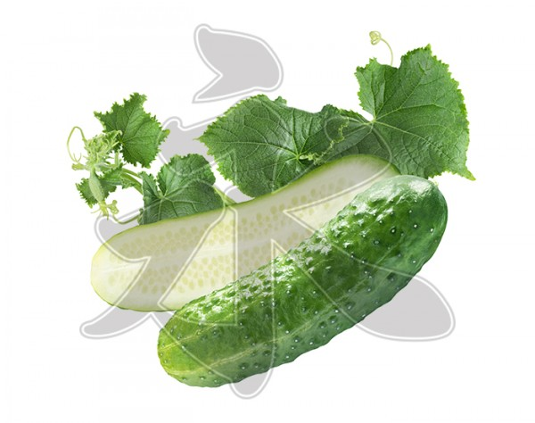cucumber cut isolated