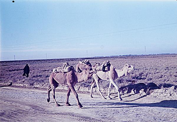 iraq-nasiria-kut