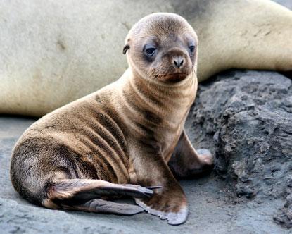 galapagos-islands-family-travel