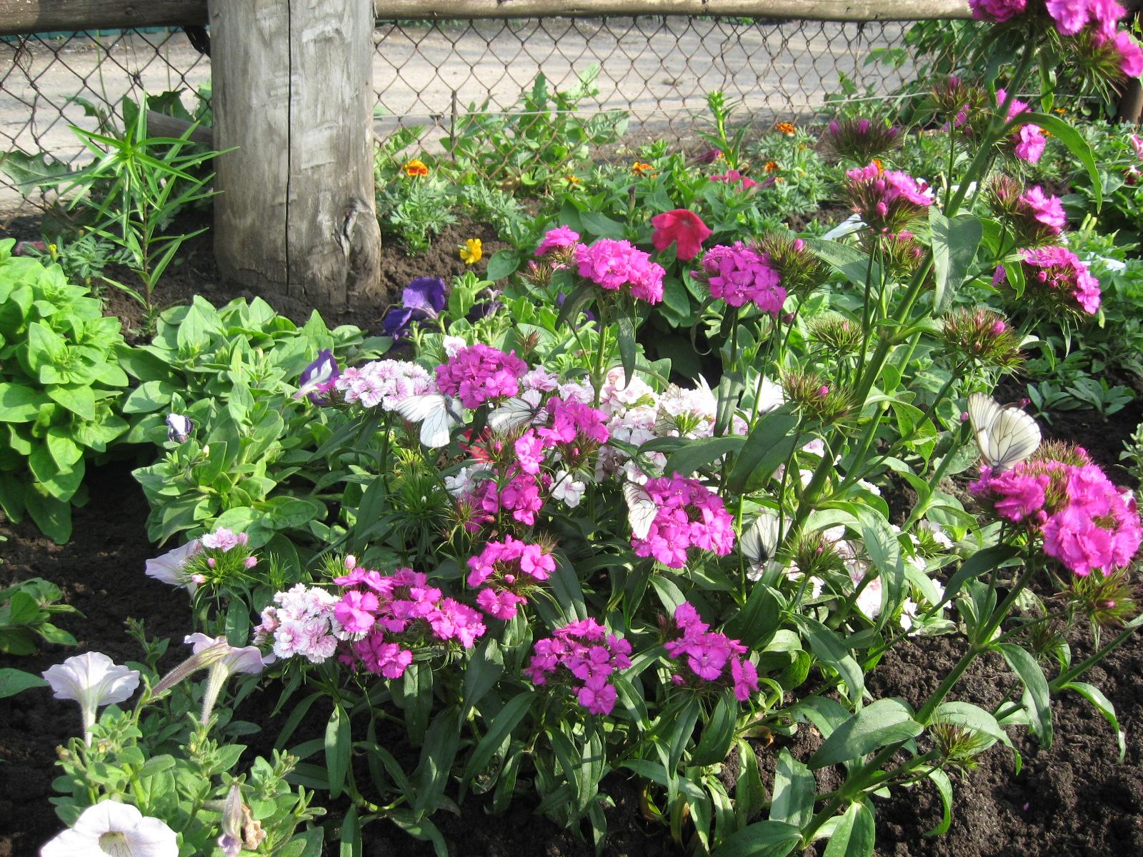 Бабочки на цветах-2
