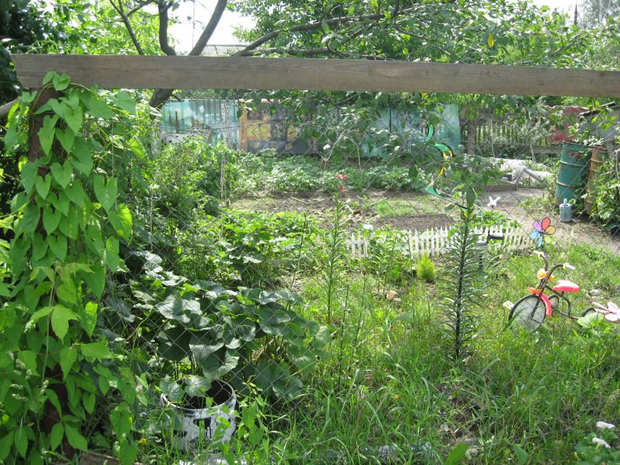 Огород соседей через сетку