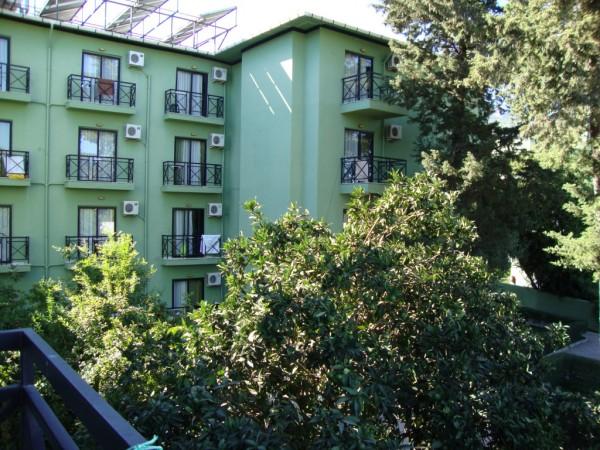 2 Мандариновое дерево под окнами корпуса