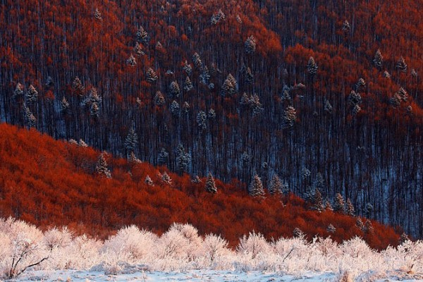 карпатский лес