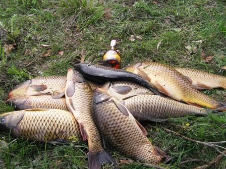 rybalka-letom-zimoy-snasti-sovety
