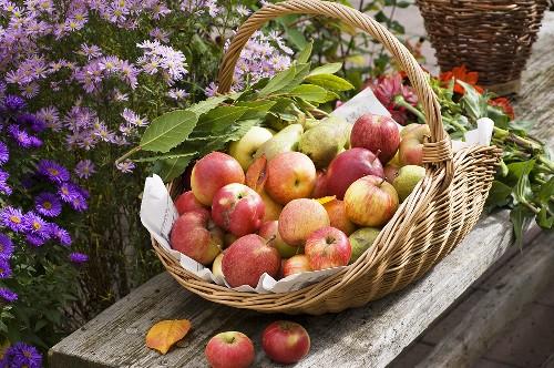 яблоки в корзини