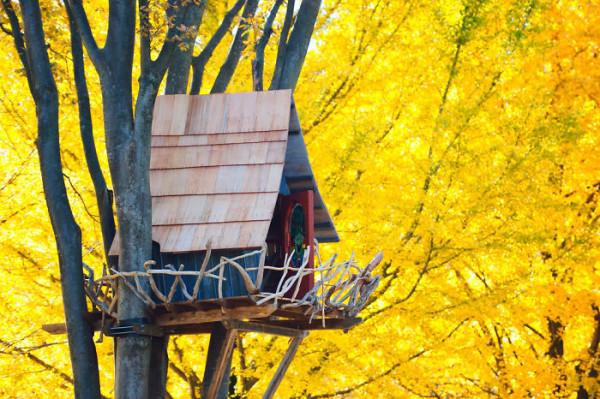 Tree-house14