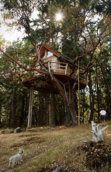 Tree-house18