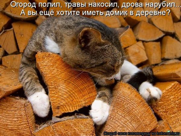 кот на дровнях