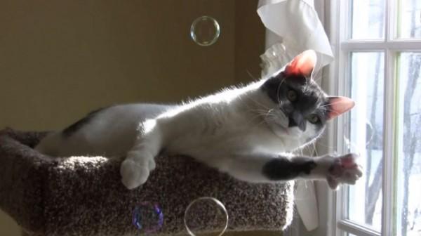 9023810-R3L8T8D-650-cat-bubbles