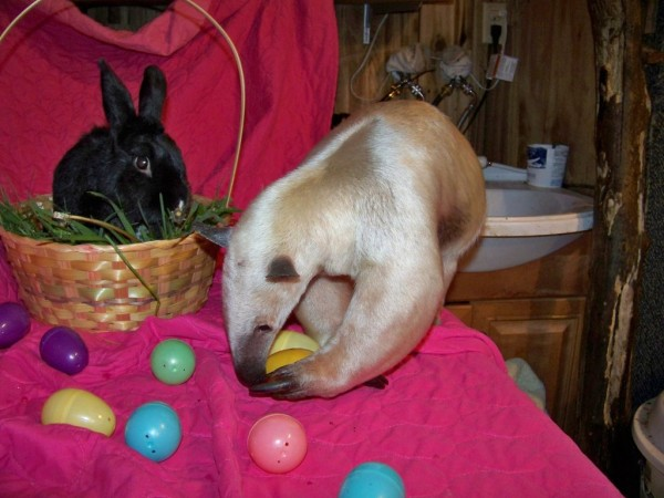 happy_easter_by_zerdafennecus-d4vlvb8