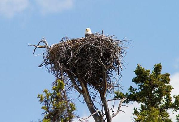 20405206_world_biggest_nest_3