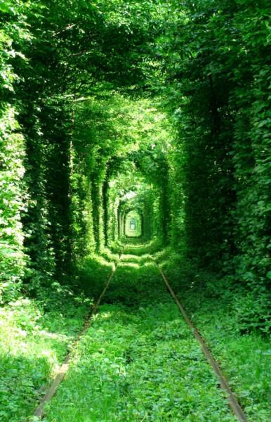 2698005-R3L8T8D-600-tunnel-of-love-green-mile-kleven-rivne-ukraine