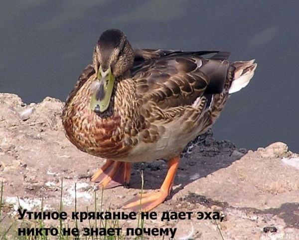 bb0d7600a6907807ddd7038536198c9f