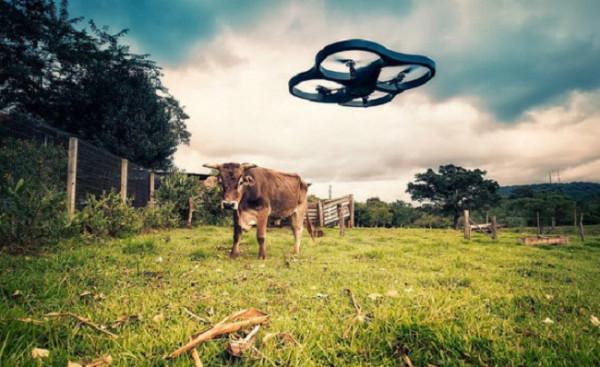 drone-vs-cow