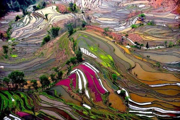 terraced-rice-fields-2__880-645x429
