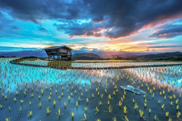 terraced-rice-fields-4__880-645x430