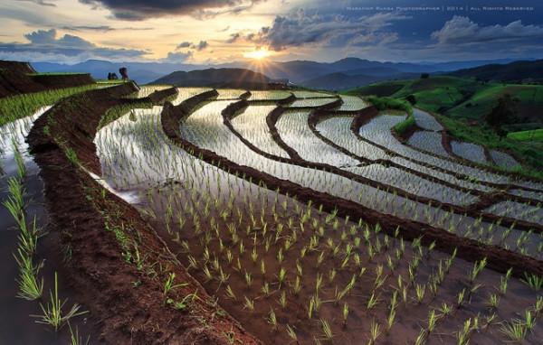 terraced-rice-fields-6__880-645x411
