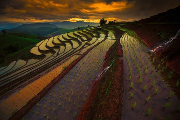 terraced-rice-fields-7__880-645x430