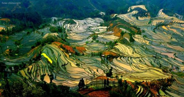 terraced-rice-fields-26__880-645x343