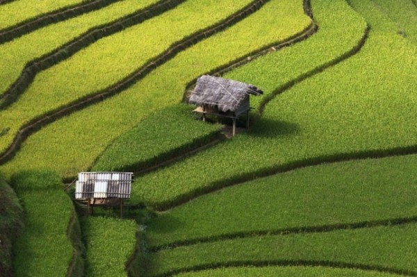 terraced-rice-fields-27__880-645x429