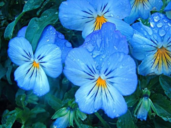 www_flowerjpg_ru-160