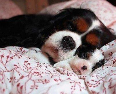 Собака со щенком спят