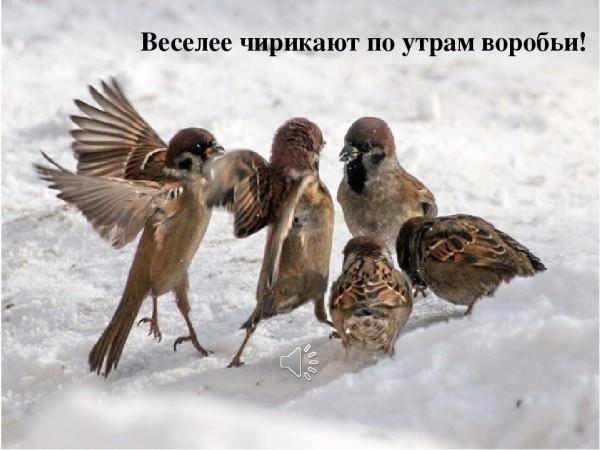 smayliki-cvety-170.gif