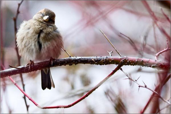 Птица ветка