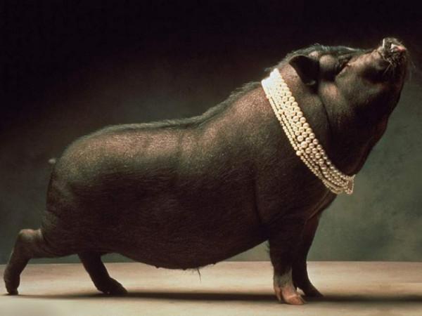 Свинья бусы