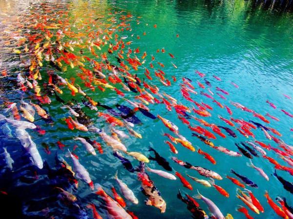 Рыбищи