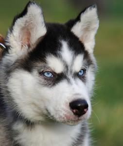 Про_собак