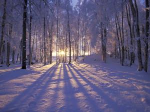 suninthe snow