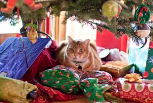 cat-under-christmas-tree