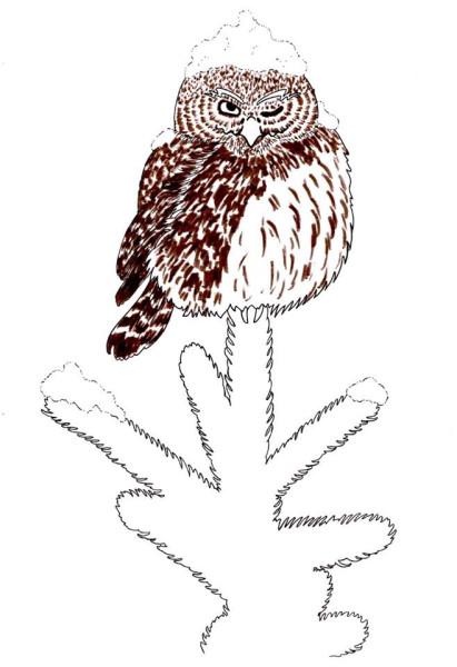 owlcarddesign