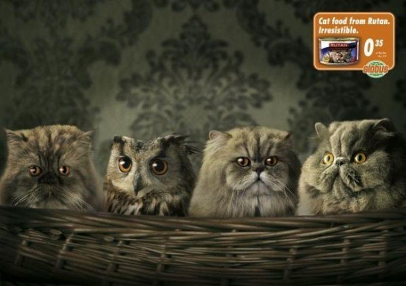 Смешная реклама корма для кошек и собак 1