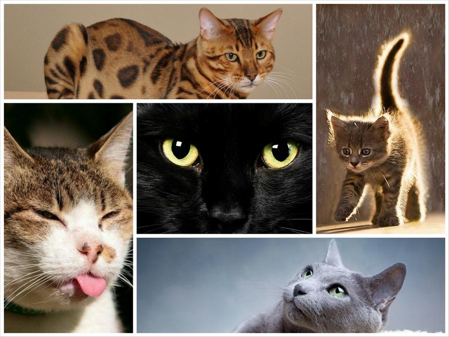 Интересные факты из жизни кошек - Power of art
