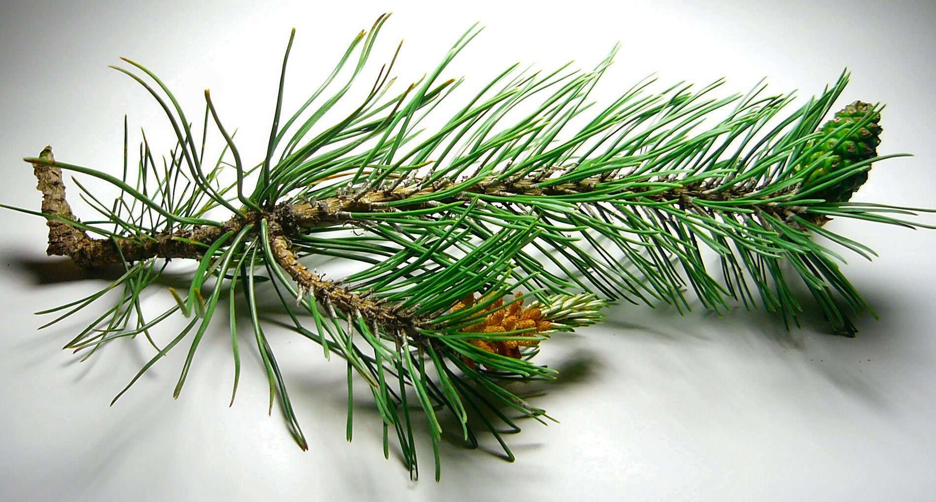 Новогодняя елка - символ Вечной жизни 7