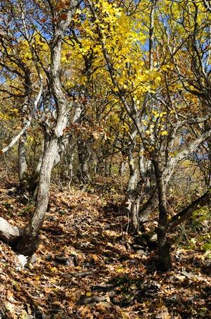 Осенний лес Машука